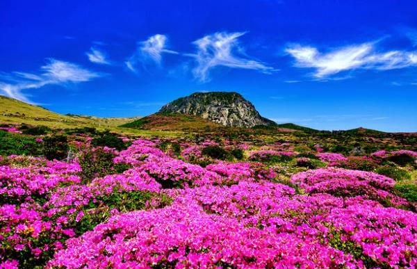 Jeju Island Tourism The heritage of natural wonders